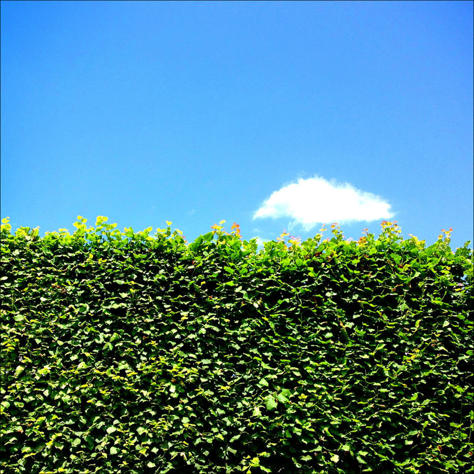 Green Hedge & Cloud