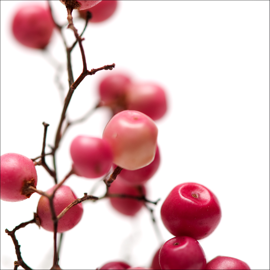 Pink pepperberries